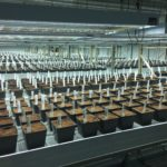 Berkshire Roots Pittsfield Marijuana Dispensary