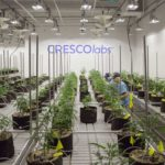 Grow Facility for CY+ Cresco Labs Wintersville Cannabis Dispensary