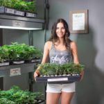 Cutting and Clones at Airfield Supply San Jose Dispensary - Credit: Airfield Supply