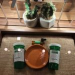 Up-Close Display at The Botanist Queens Dispensary - Credit: The Botanist