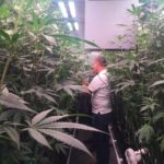 Grow for Medici Products and Services Woonsocket Dispensary