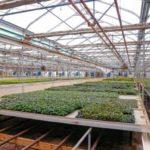 Sun Mass's Grow Facility in Deerfield, Massachusetts- Credit: The Hampshire Gazette