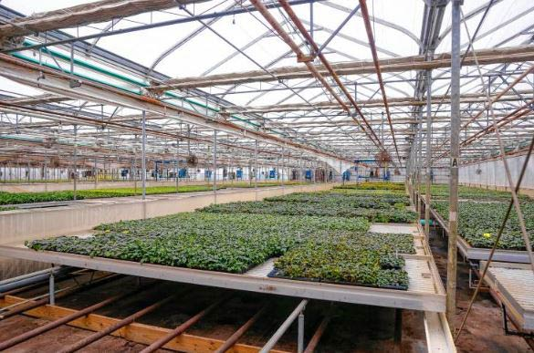 Sun Mass's Grow Facility in Deerfield, Massachusetts- Credit: The Hampshire Gazette